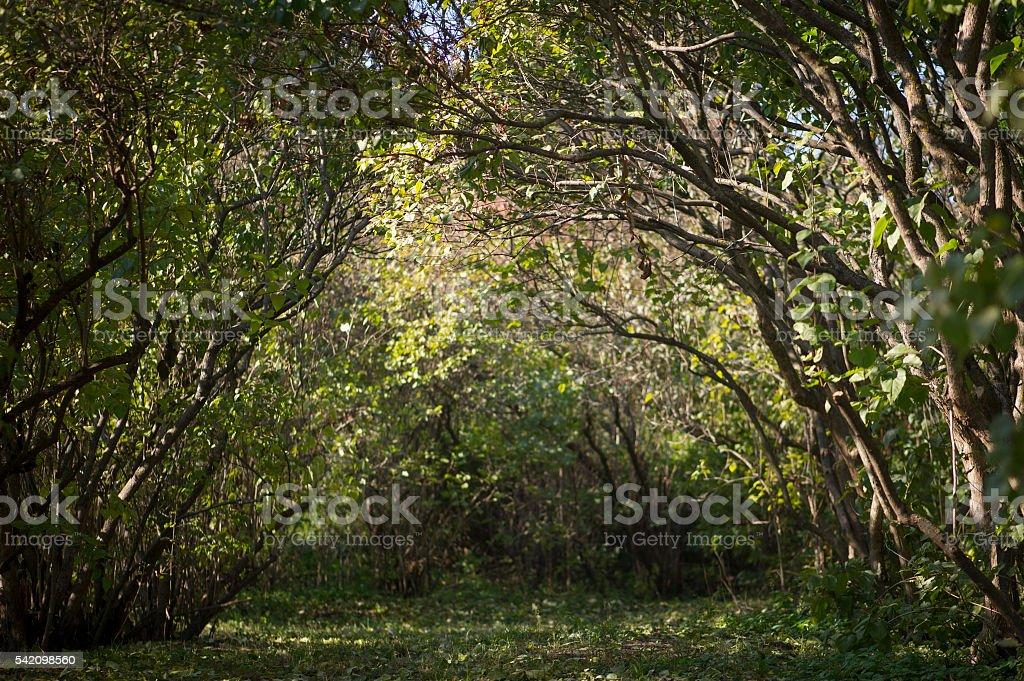 Straße in Wald – Foto