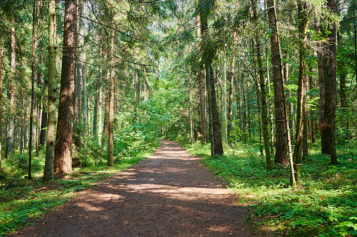 Road in green forest with sunny rays background