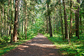 istock Road in green forest 1262306822