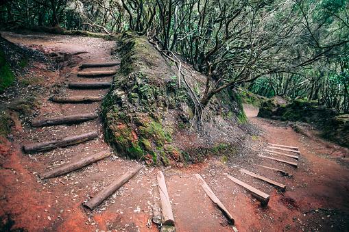Road in jurassic laurel forest