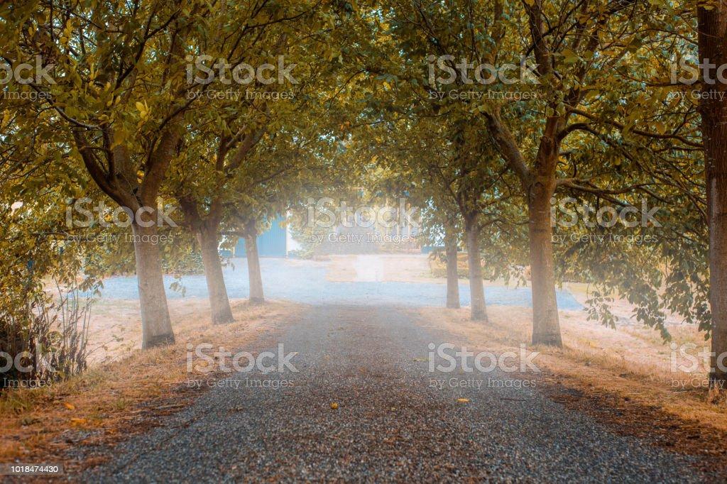 Straße in nebligen Wald im Herbst, bunte Bäume – Foto