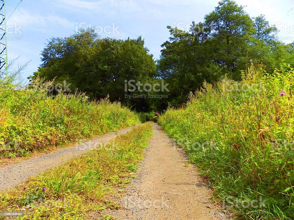 Road in nature royalty-free stock photo