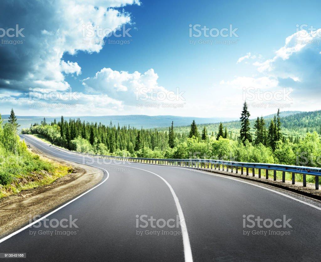 road in north forest - Foto stock royalty-free di Albero