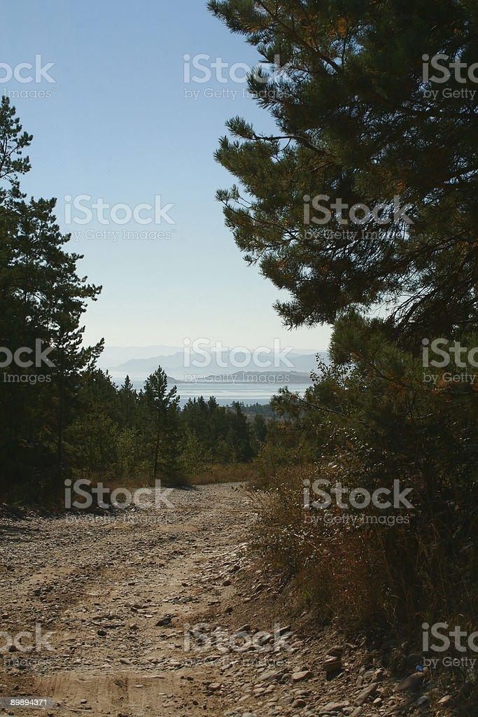 Road im Pinienwald an der Küste der Bucht Lizenzfreies stock-foto