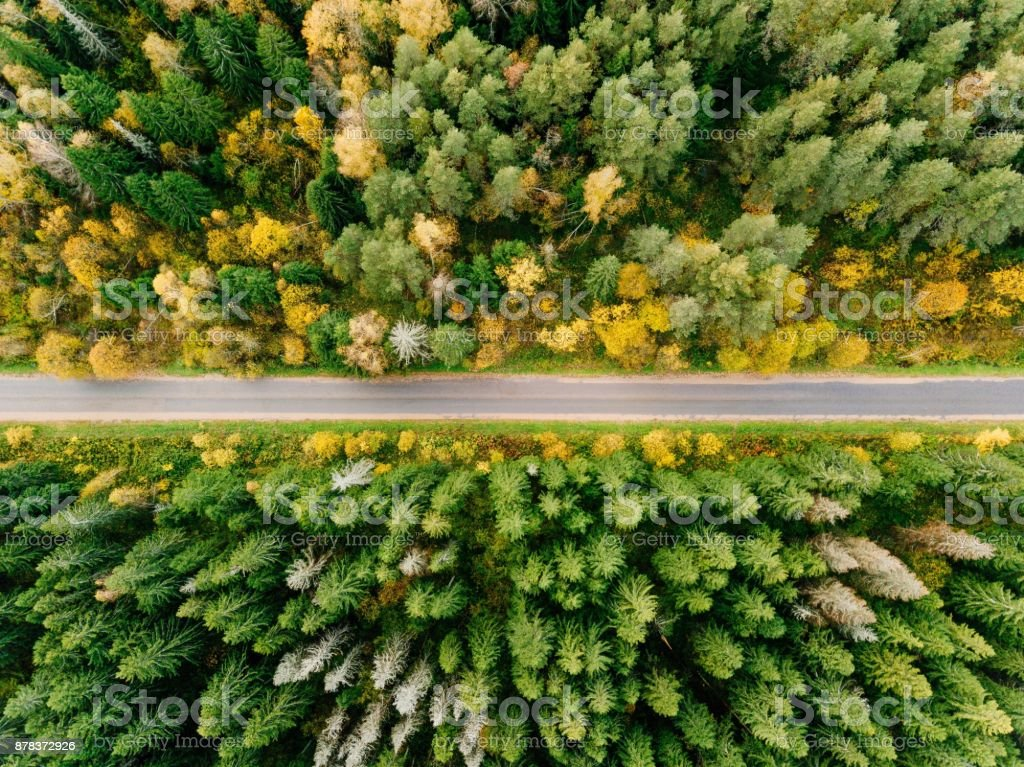 Road in the autumn forest aerial view stock photo