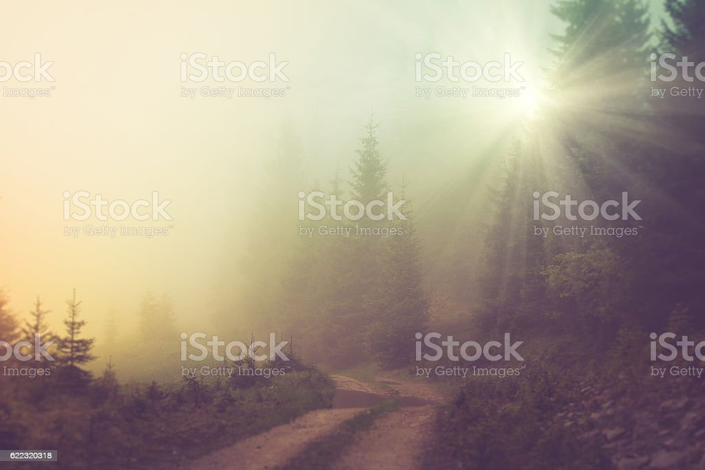 Road in the fog of the mountain forest. stock photo