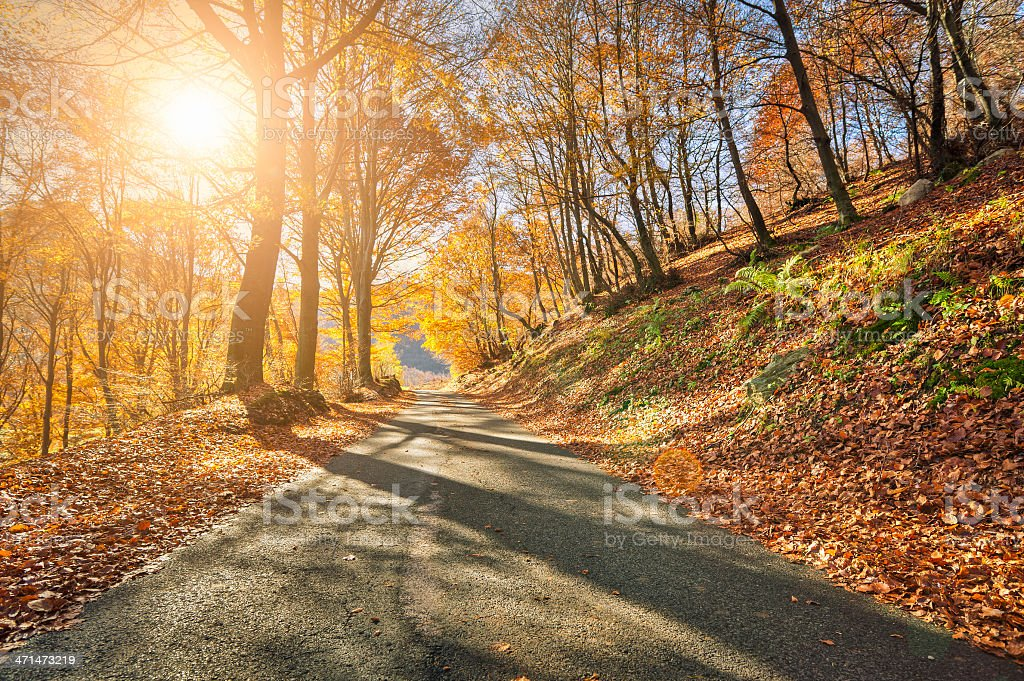 Road In The Forest During Autumn royalty-free stock photo