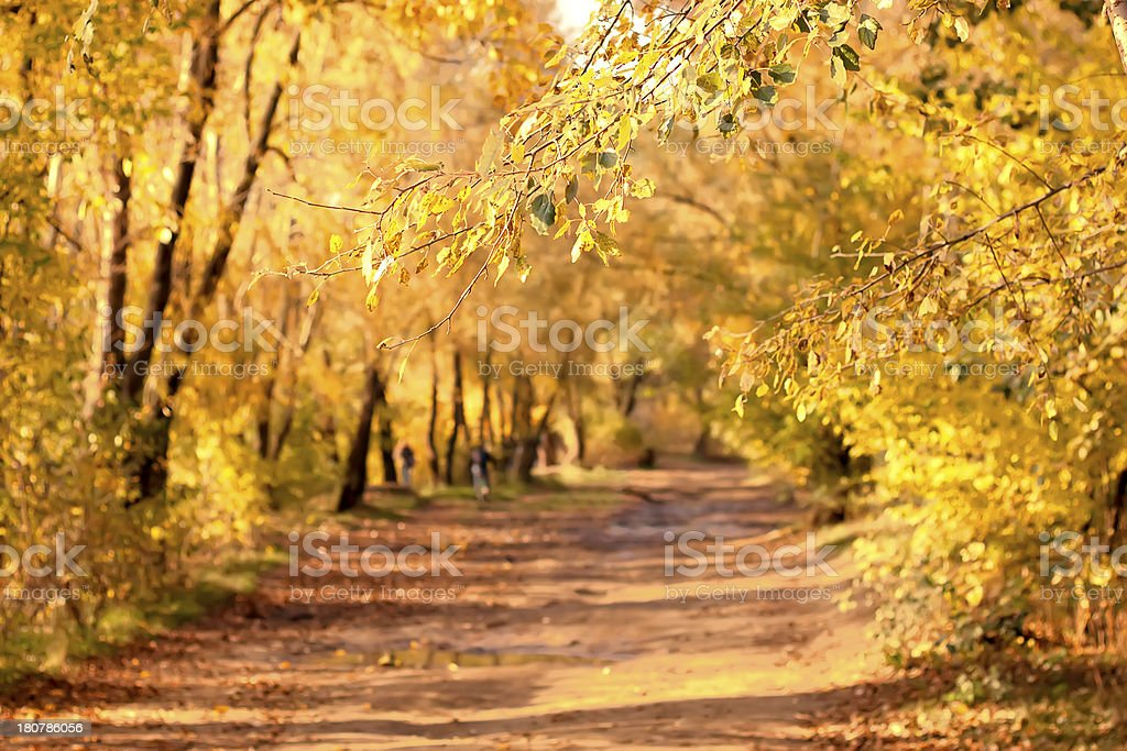 Road in the forest royalty-free stock photo