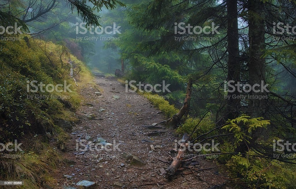 Road in the forest stock photo