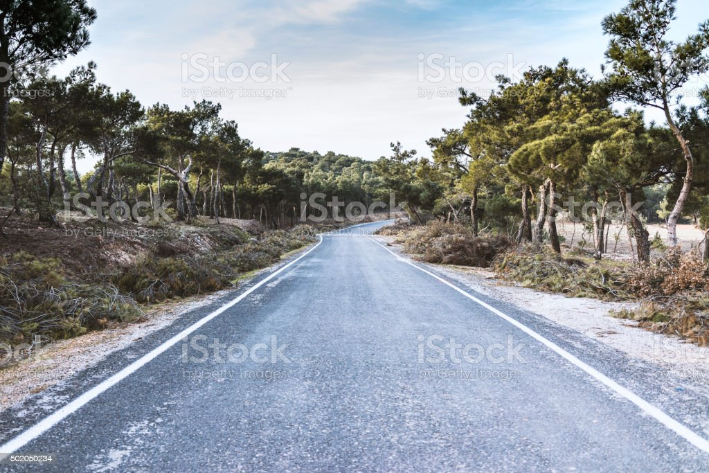 Road in the forrest stock photo