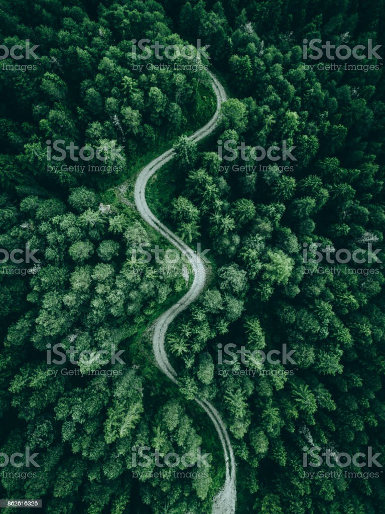 Road in the middle of a forest from above stock photo