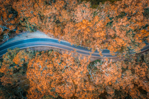 Road in the middle of forest in Australia stock photo