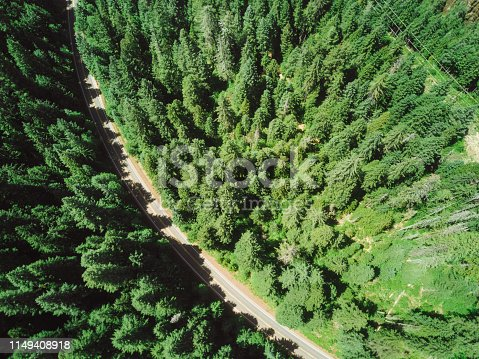 888361900 istock photo road in the middle of the forest 1149408918