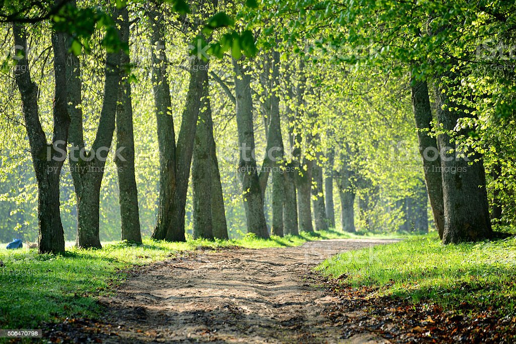 road in the morning forest stock photo