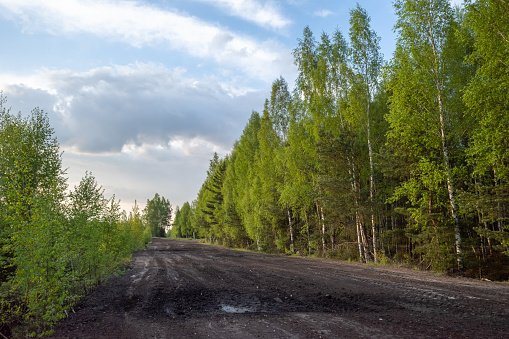 Wet road in the peat fields with green birch trees by the road on spring evening under cloudy sky