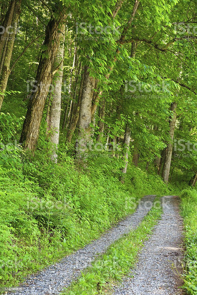 Road in the Spring with Lush Green Leaves stock photo