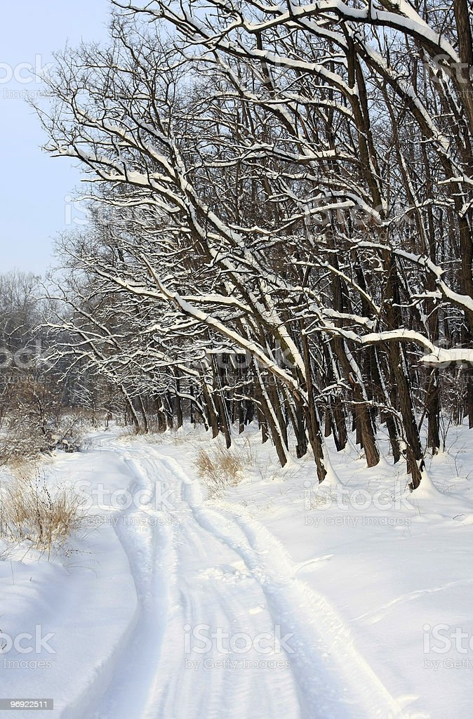 Road in the winter forest royalty-free stock photo