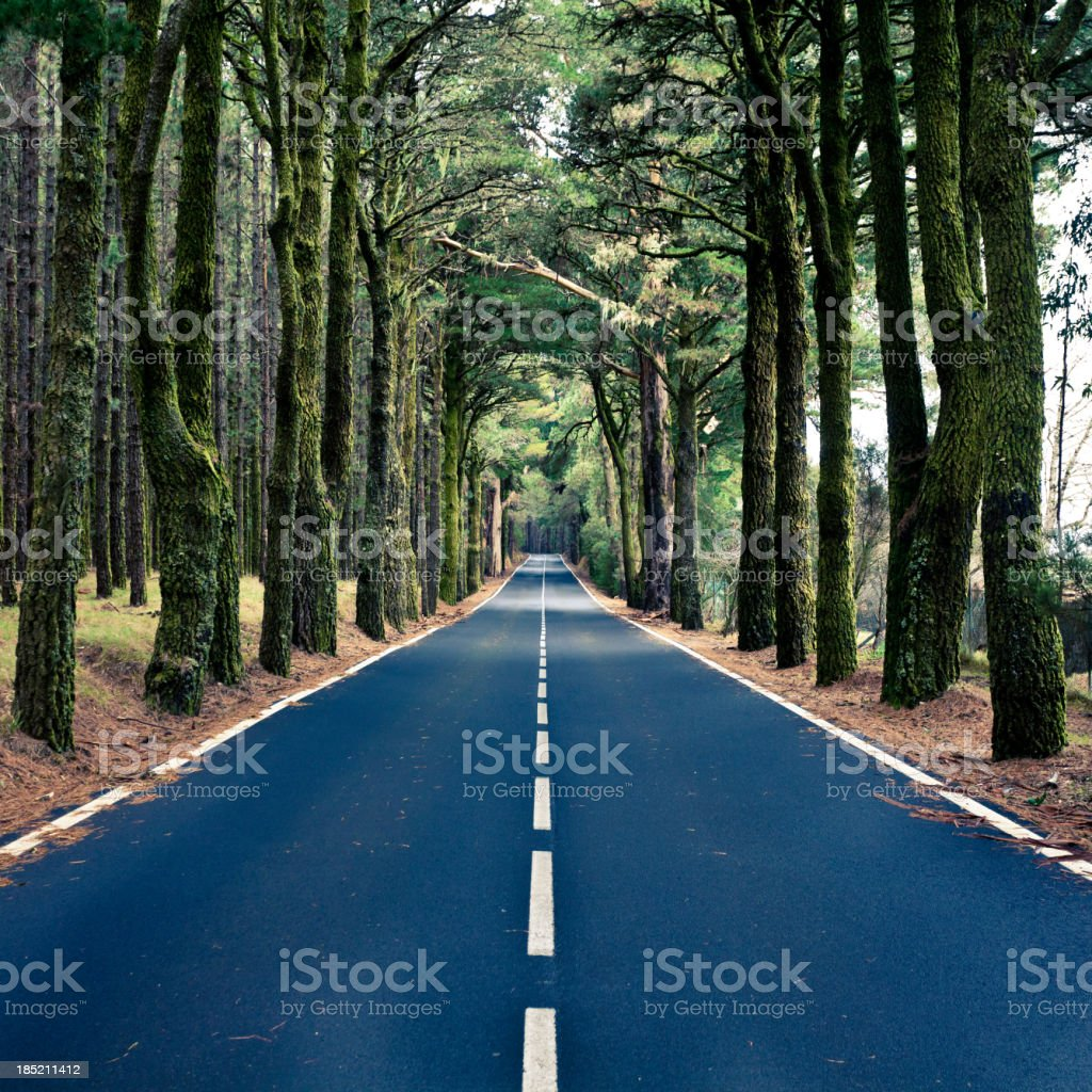 Road in the Wood, Canary Islands royalty-free stock photo