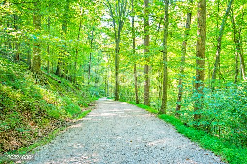 Stock photograph of a dirt road in Mammoth Cave National Park Kentucky USA on a sunny day.