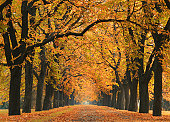road into the autumn - beatiful avenue - red and yellow leaves covers the road amd the trees.