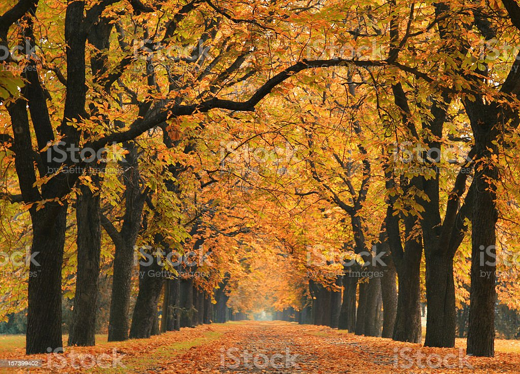 road into the autumn stock photo