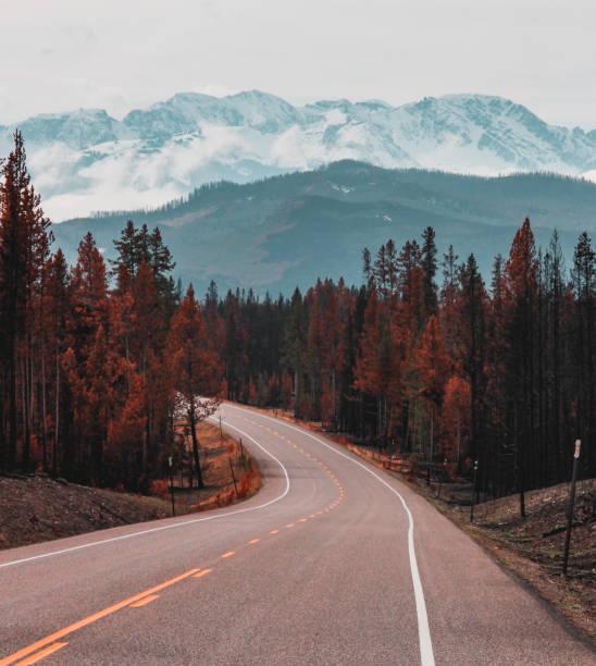 Road into the wild stock photo