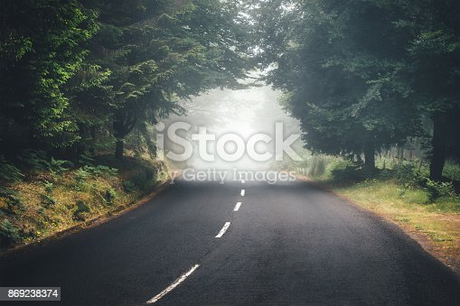Road through the foggy forest on Madeira Island.
