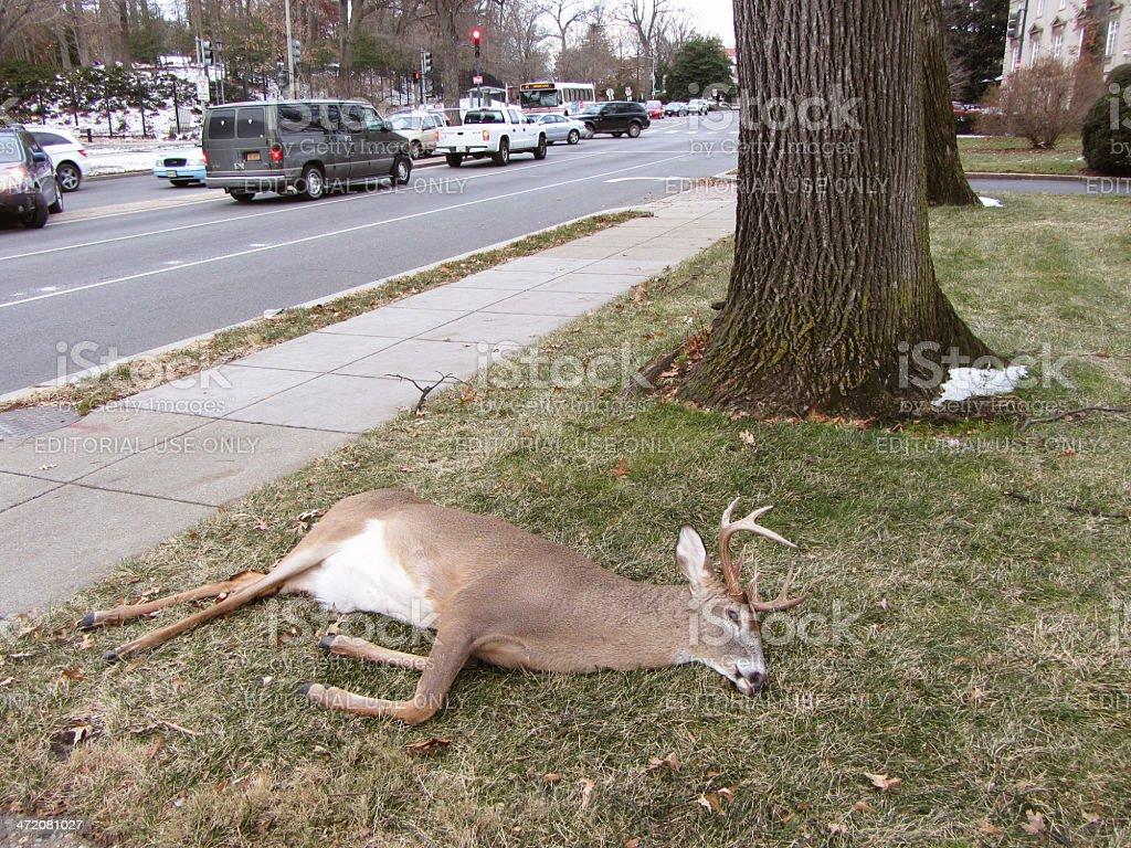Estrada matar em Washington, DC - foto de acervo