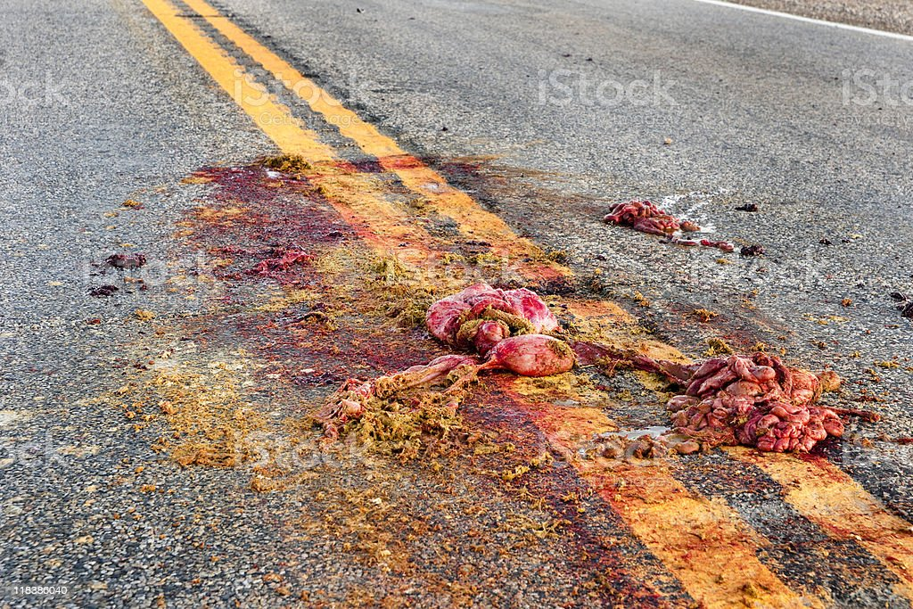 Road Kill stock photo
