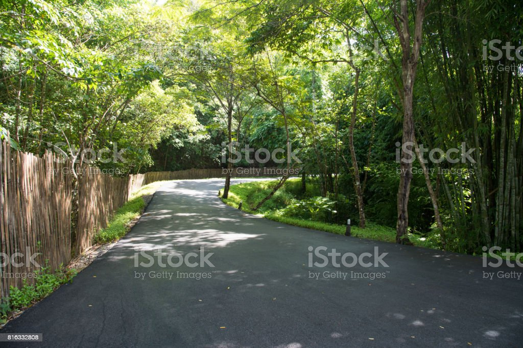 Road lane, walkway path with tunnel green trees in forest. Beautiful alley, road in park. way through summer Forest. stock photo