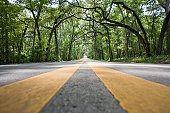 Road level shot of a tree covered empty road with yellow stripes leading in the distance creating a vanishing effect.