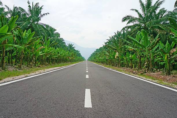road gefüttert mit palmen - horizontal gestreiften vorhängen stock-fotos und bilder