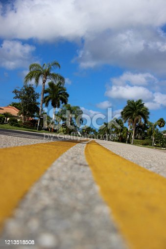Road lines on Florida street with palm trees