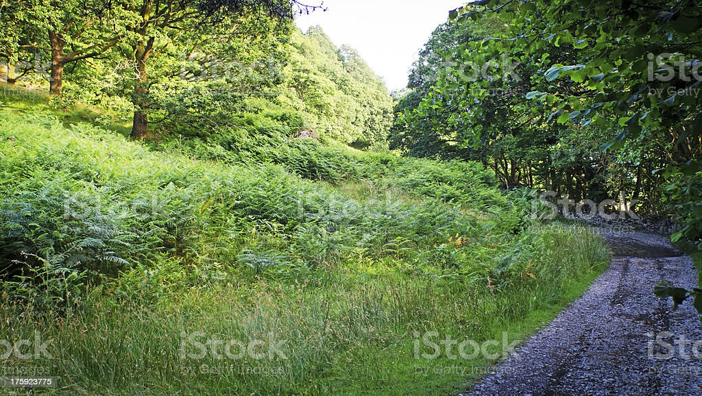 Road near Coniston water royalty-free stock photo
