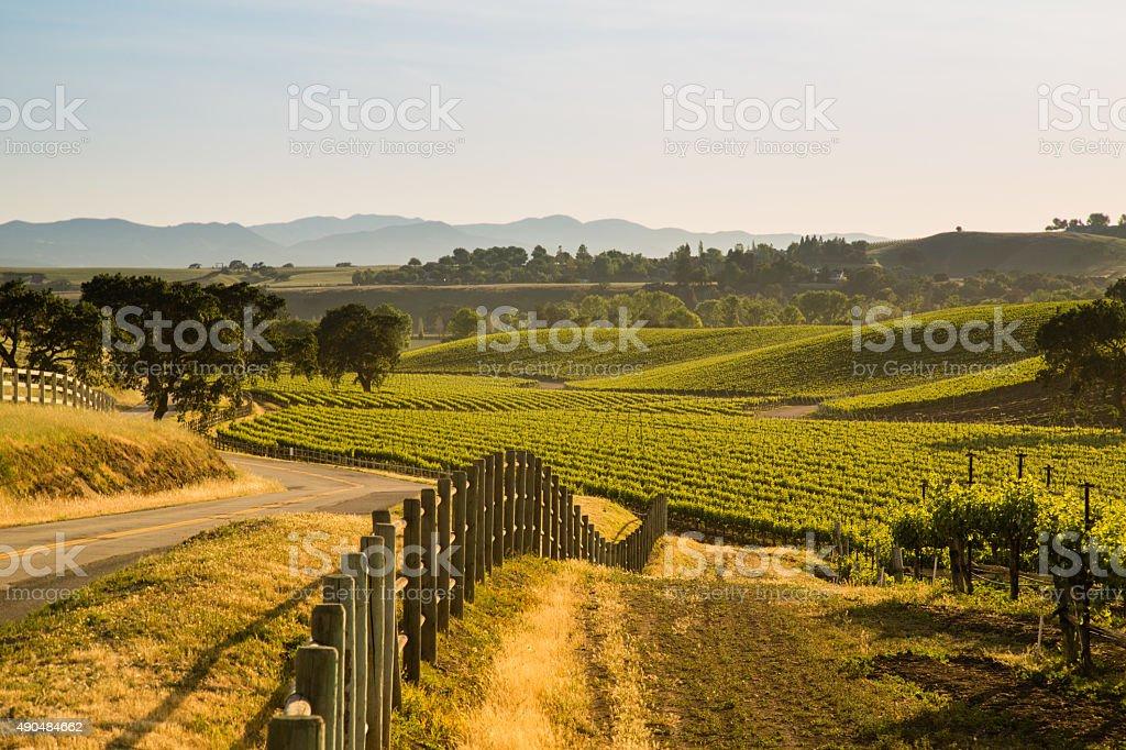 Road Next To Lush California Viineyard, Santa Ynez, CA stock photo