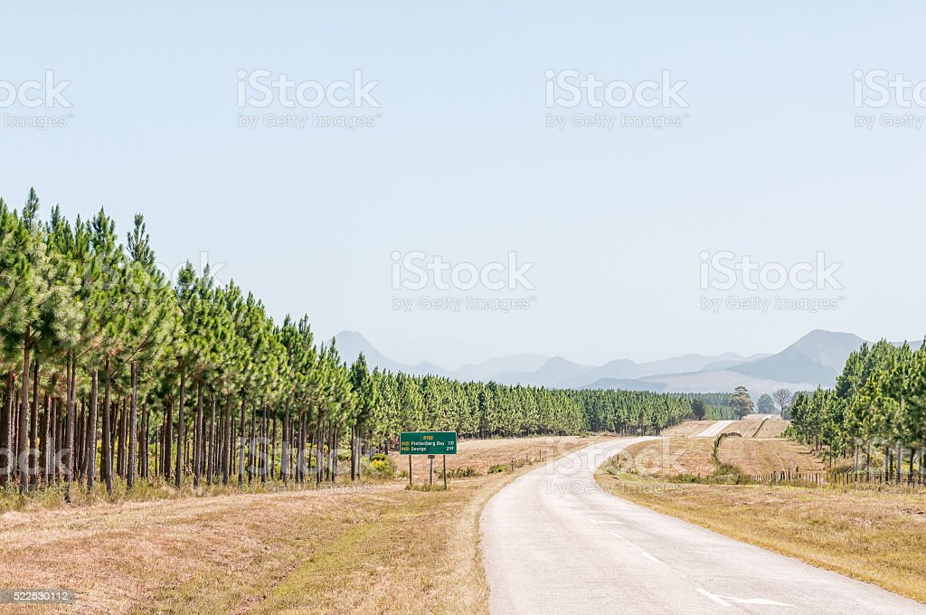 Road next to pine tree plantations stock photo