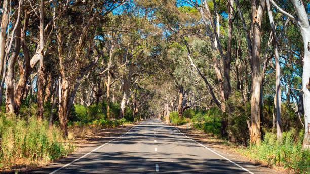 Straße auf Kangaroo Island – Foto