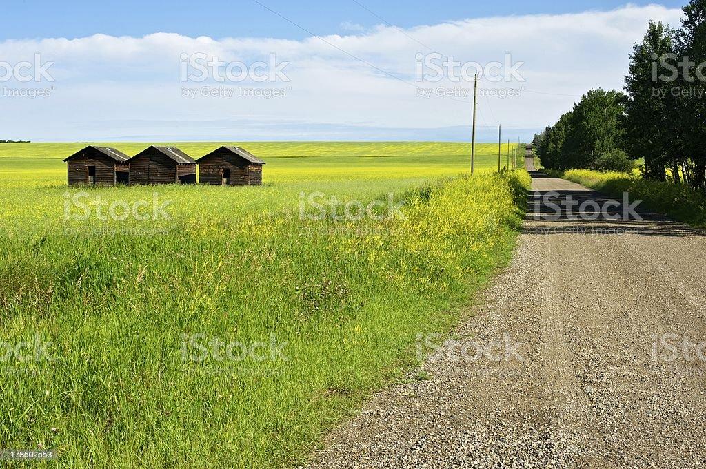 road past granaries and canola royalty-free stock photo