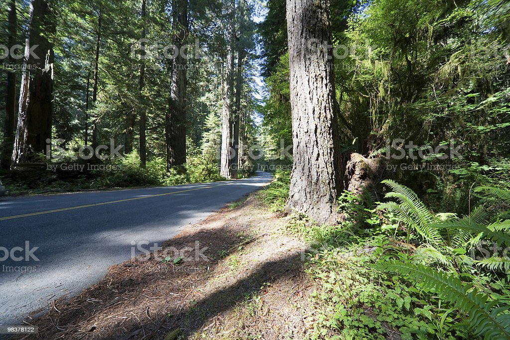 Road Redwood National Park royalty-free stock photo