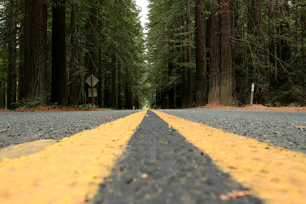 Road-Redwood – Foto