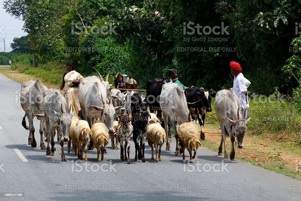 Road scene near Nagarahole Park, India stock photo
