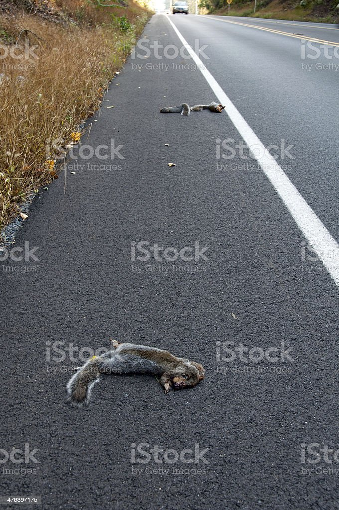 Road Side Kill royalty-free stock photo