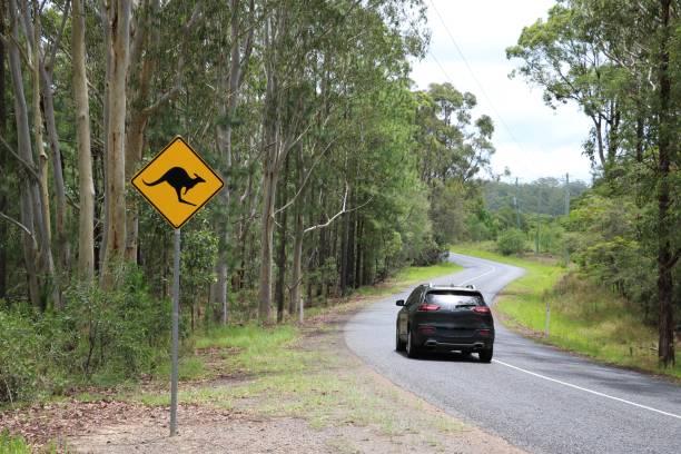 Road sign beware kangaroo on the roadside, Australia stock photo
