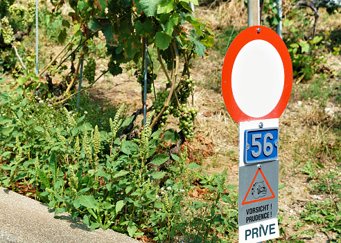 Road Signs at Vineyard Terraces hiking trail Lavaux in Switzerland