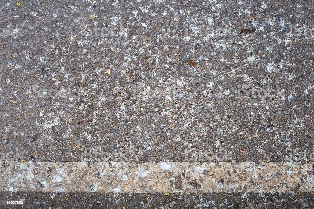 Road surface with bird droppings stock photo
