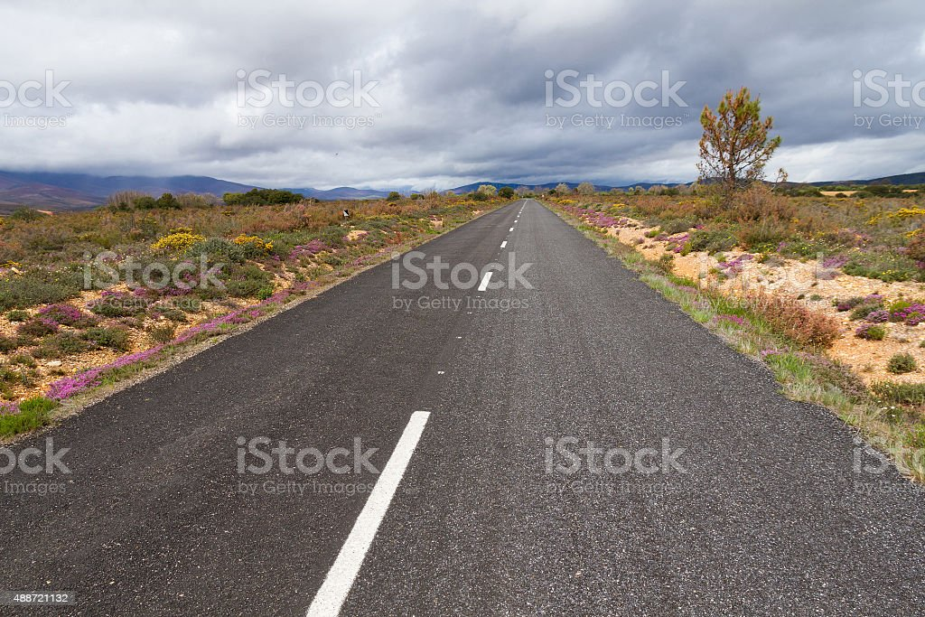 Road surrounded by vegetation in Spring - Carretera stock photo