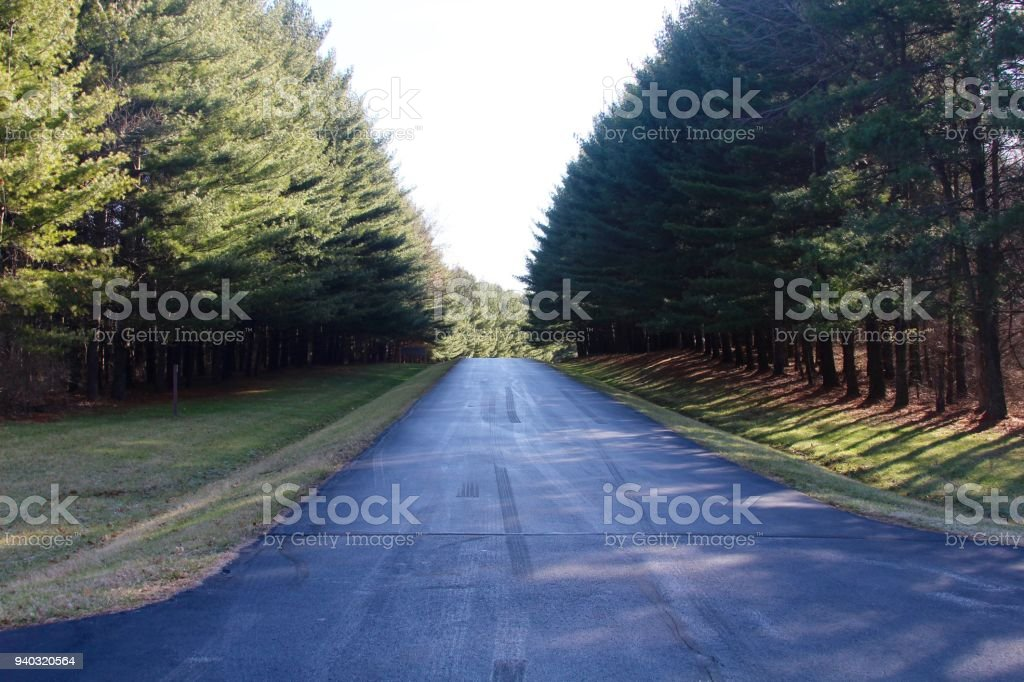 Road though the Pines stock photo