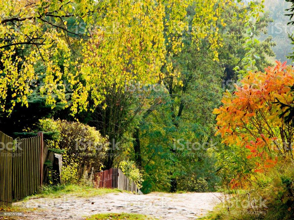 Straße durch ein Masurischen Dorf - Lizenzfrei Baum Stock-Foto