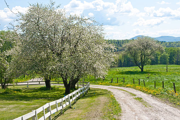 Road through an old orchard in spring stock photo
