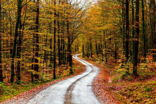 Road through autumn forest stock photo